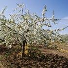 Árvores frutíferas que gostam de solo molhado