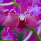 Cómo combatir cochinillas en orquídeas