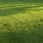 ¿Cuál es la mejor temperatura para usar el herbicida Roundup?