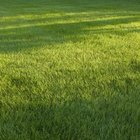 Sod is often the fastest way to establish lush turf grasses.