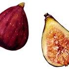 dried Jujube fruit
