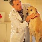 ¿Qué pasa si un perro sigue vomitando?