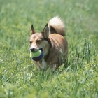 Cómo construir un corral para perros