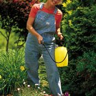 Pesticidas para los trips