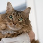 What to Do if Flea Medicine Goes on a Cat's Hair & Not Skin