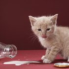 Can You Give a Kitten Skim Milk?