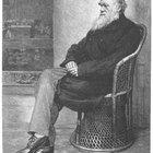 ¿Cuáles son las cuatro ideas principales de Darwin sobre la evolución?