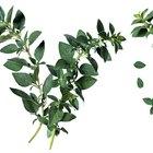 Cómo secar y guardar hojas de orégano después de una helada o clima frío
