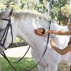 Meu cavalo está perdendo pelos e a pele está escamosa como caspa