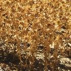 Peligros de los fungicidas