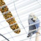Can a Food Change Kill a Parakeet?