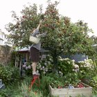 Do Apple Trees Lose Their Leaves in the Winter?