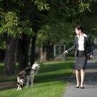 ¿Con qué frecuencia orinan y mueven el intestino los perros?