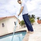Como se livrar de insetos barqueiros na piscina