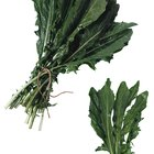 How to identify yellow-flowering weeds