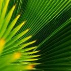 Como trançar folhas de palmeira