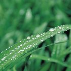 Plantas que toleran el suelo húmedo