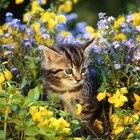 Will Cat Feces Hurt Garden Soil?