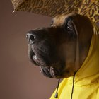Sewing Your Own Raincoats for Dogs