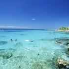 Qué hacer en el Puerto de Cozumel