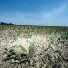5 maneras de controlar la erosión del suelo