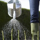 How to Make a Soil Wetting Agent