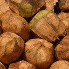 Cómo secar el coco para unos bocadillos