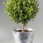 ¿Cómo hacer que una planta crezca más rápido?
