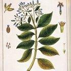 Como ensinar as crianças sobre o ciclo de vida das plantas