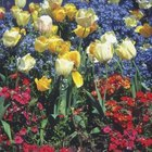 Colorful bulbs and annuals announce spring with a cheerful splash.