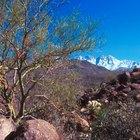 Excursionismo en los cuatro picos de Four Peaks, AZ