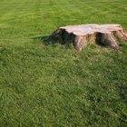 Cómo eliminar un árbol o tocón de forma natural