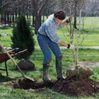 Plant shade trees on the east or west side of your home to lower utility costs.