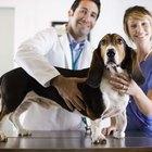 Gotas para ojos de ciclosporina para perros