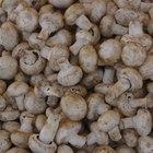 Tipos de cogumelos comestíveis