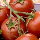 Frutas y verduras que crecen en Italia