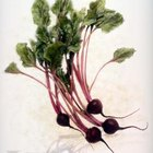 Like other vegetable greens, beet greens are not only edible but delicious