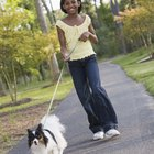How to Prevent a Papillon From Eating Animals Feces on a Walk