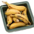 Como alimentar roseiras com cascas de banana