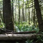 O que acontece quando as árvores da floresta tropical são cortadas?