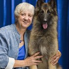 ¿Cuáles son las causas de las canas prematuras en perros?
