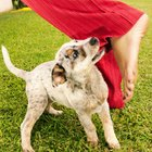 How to Stop Dominant Dogs From Playing Too Rough