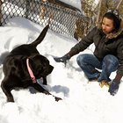 Dangerous Cold Temperatures for Dogs and Cats