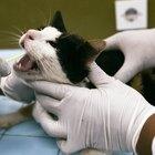 O que acontece com um gato exposto à tetrametrina e à cipermetrina?