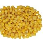 Como tirar milho da espiga