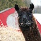 Cuidados com peças de tricô de lã de alpaca