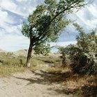 Árboles resistentes y tolerantes al viento