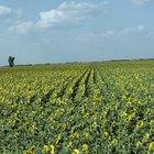 Ventajas y desventajas de la agricultura