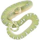 Cómo se adaptan las serpientes en el bosque