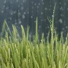 Como cortar grama na chuva